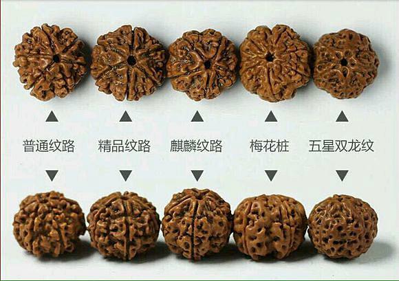 金刚菩提纹路的分类图